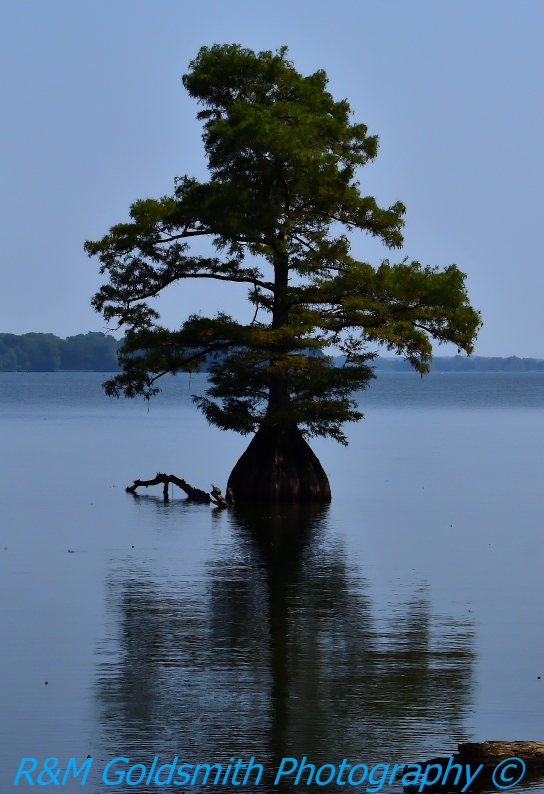 Reelfoot Waterscape 5