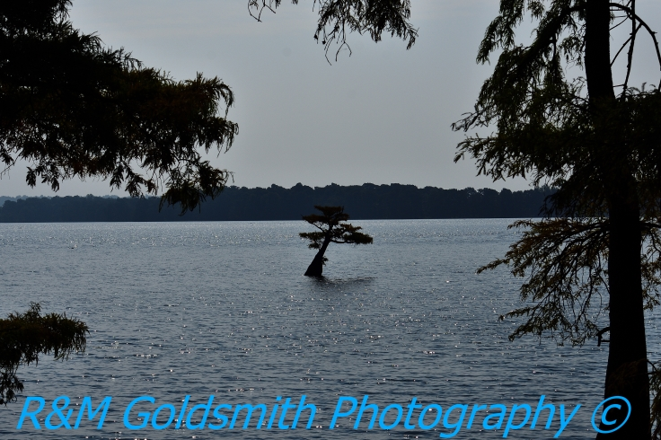 Reelfoot Waterscape 5_1