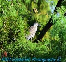 Laprienne Park Louisiana_1_1