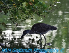 Laprienne Park Louisiana_1_2