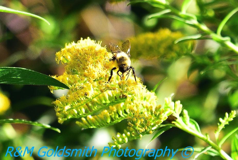 3 Hour Photo Trip – BackyardBumblebees