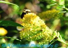 Bumble Bee 8 Backyard_1