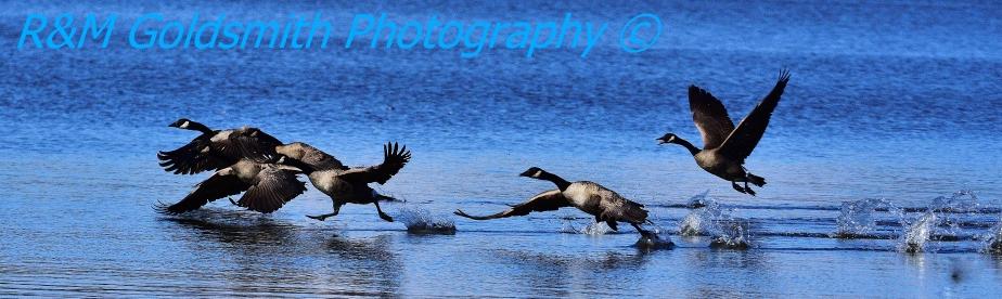 3 Hour Photo Trips – Sardis Lake,MS