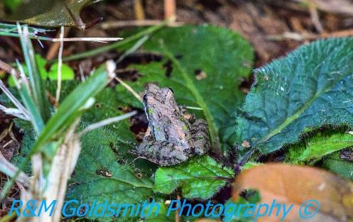 Frog 3 Backyard_1