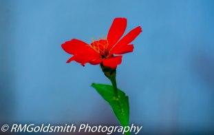 Red Flower blue
